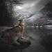 Voice of Wilderness by Alicja Zmysłowska