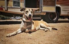 #desert #dog #desertdogs #page #rv #rvs