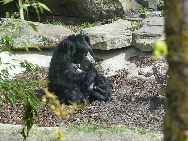 Kaveri und Balou, Zoo Berlin