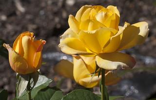 Brookside Gardens  (43)