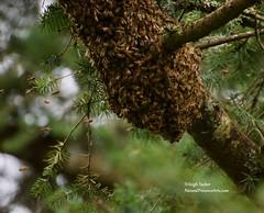 2017-5-4-9705-Swarm!
