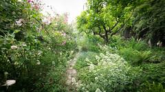 Giardino di Patrizia Matteucci