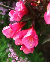 Went for a walk and was enchanted by the beauty of Spring.  . . . . . . #amazing #bloom #ip_blossoms #flora #flower #explore #flowermagic  #floweroftheday #flowerpower #flowers #9vega9 #ig_great_pics #BD_ #fingerprintofgod #flowerslovers #flowersandmacro