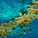 Jellyfish Swarm