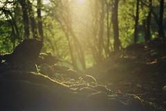 Dans les sous-bois. - Photo of Champier