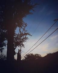 Moonrise Kingdom  #dallas #texas #backyardviews