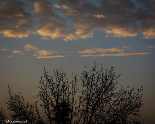 nature clouds trees treetops sunrise dawn