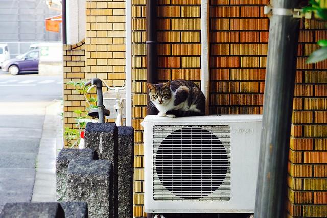 Today's Cat@2017-05-11