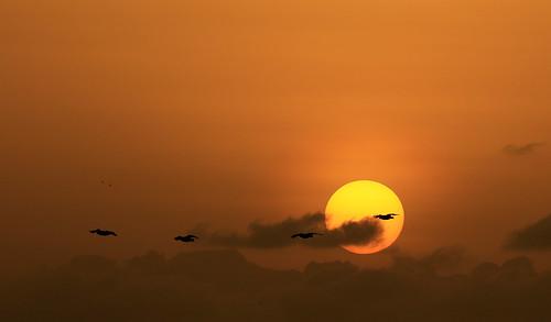 senegal sunset coucherdesoleil nature
