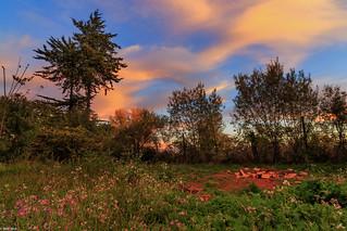 Autumn in Linares