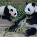 Xi Lun and Lun Lun by smileybears