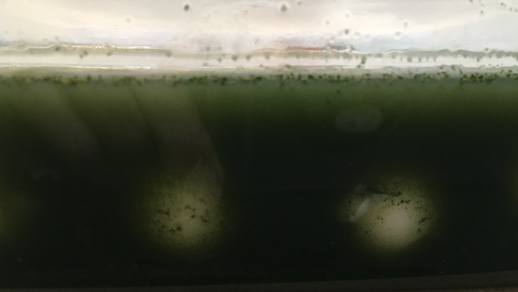 Prototyping: Green egg swamp