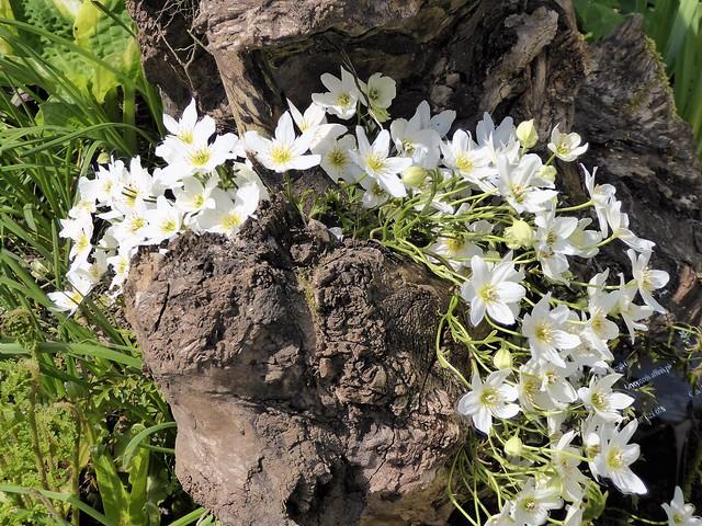 Tumbling blossoms