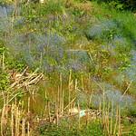 Slight blue haze on the canal bank