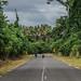 The Nivan Road