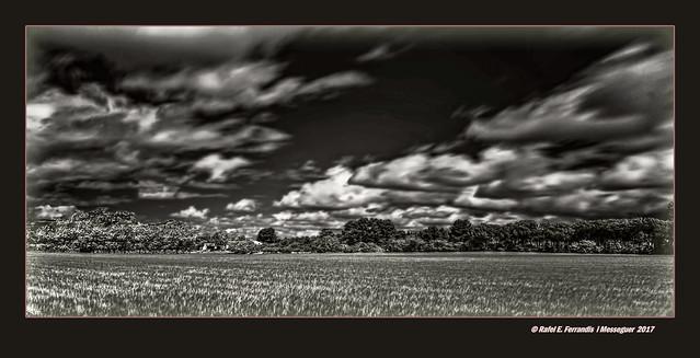 Camp de blat (Paisatge infraroig) A Wheat Field (Infrared Landscape) Vall dels Alforins, la Vall d'Albaida, València, Spain