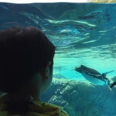 よこはま動物園ズーラシアに来ました