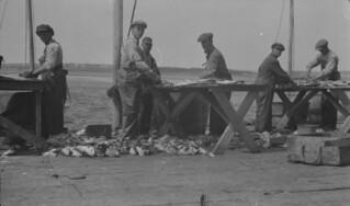 Men working at fishing stage in Rustico, Prince Edward Island / Hommes préparant le poisson à leurs chafauds, Rustico (Île-du-Prince-Édouard)