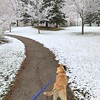 Taking my puppy for a walk.