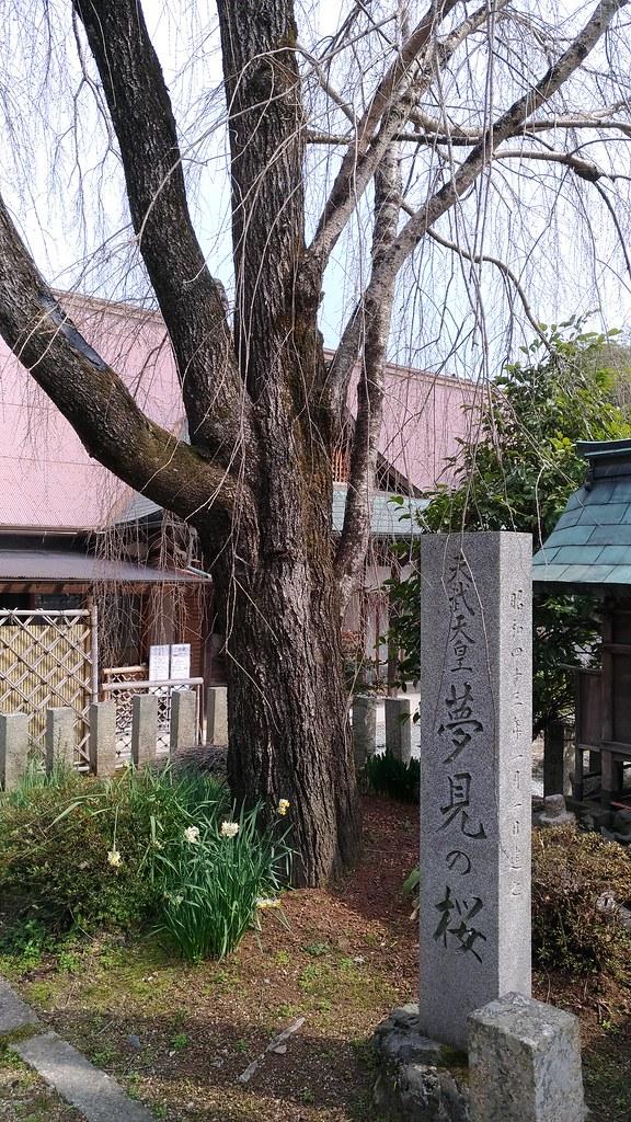 吉野 桜本坊 桜