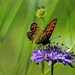 Small photo of Butterfly on a flower.