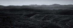 Mediterranean Hillsides