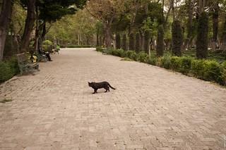 Black Cat Walking