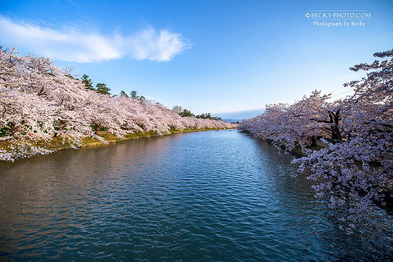 2017.Apr 青森弘前城櫻 @Aomori, Japan