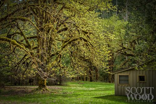 grass lakecushman washington tree dreamy house staircase sony nps olympics forest hoodsport unitedstates us