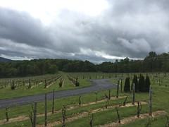 Winery, Linden, Virginia