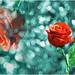 double-rose by verenaredfoxgredler