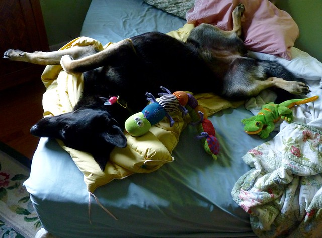 Dog  Nest, Panasonic DMC-FZ35