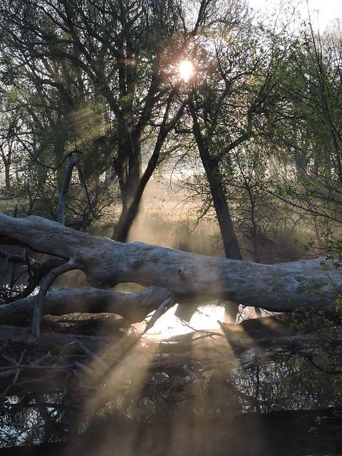 Morning Mist at Pawnee, Nikon COOLPIX P600