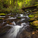 Bend in the creek...  Roaring Fork Motor Nature Trail, Great Smoky Mountains National Park by jason_frye