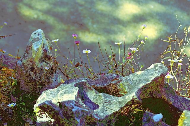 Daisies + Abstract Rock!