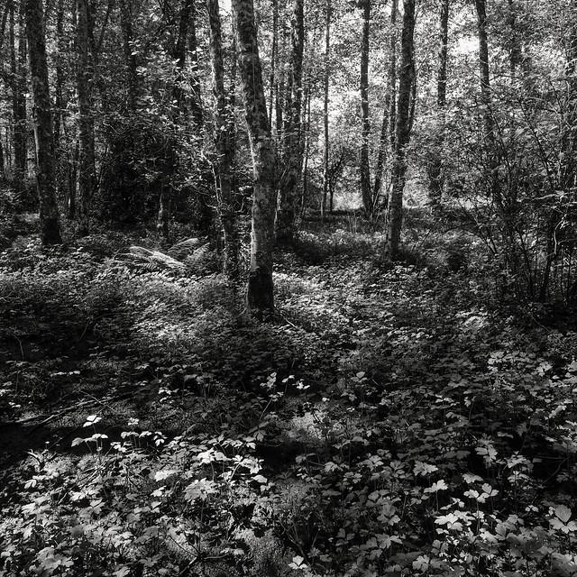 Nettle Wetland Drying 2, Fujifilm X-E2, Touit 2.8/12
