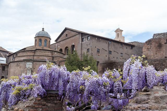 Roman Forum wisteria