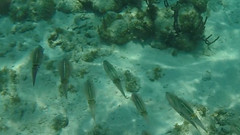 Belize Snorkeling-013.jpg