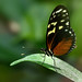 butterfly on a leaf by Sabinche