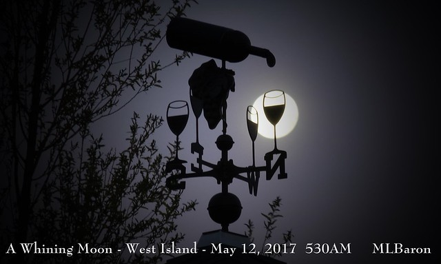 A Whining Moon West Island - Fairhaven, MA May 12 2017