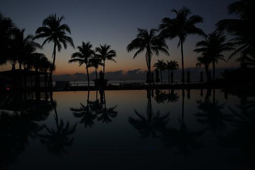 infinitypool fortlauderdaleflorida bocean palmtrees