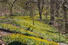 金, 2017-04-14 15:18 - New York Botanical Garden (Bronx)