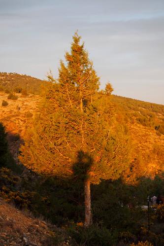 Autorretrato (el árbol al atardecer)