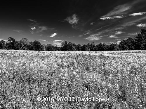 allrightsreserved dukefarms hillsborough nj newjersey copyrighted nature ©2016davidlopes olympus em1 omd