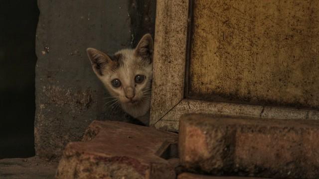 Kitten Next Door
