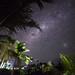 Starry Tanna Jungle