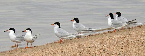 birds moinikonp900