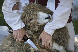 Colonial Williamsburg Virginia  Duke of Gloucester St.  sheep shearing | by watts_photos