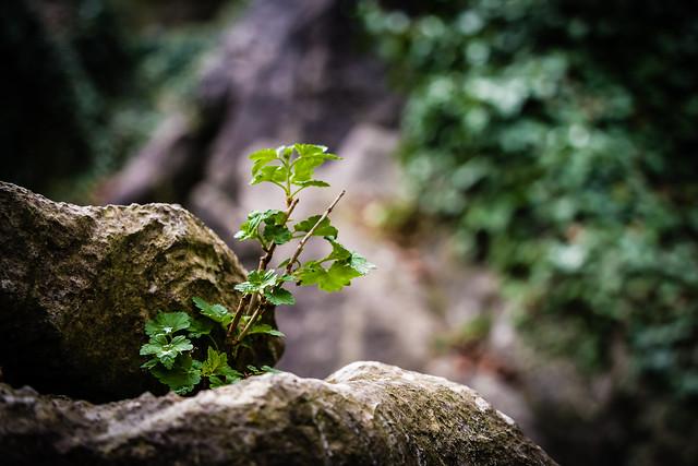 life among rocks