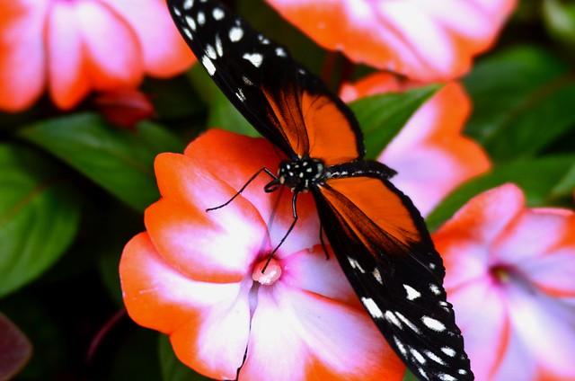 0118ex  Vibrant colors  **Explore**, Nikon D7000, Sigma 50-500mm F4.5-6.3 DG OS HSM